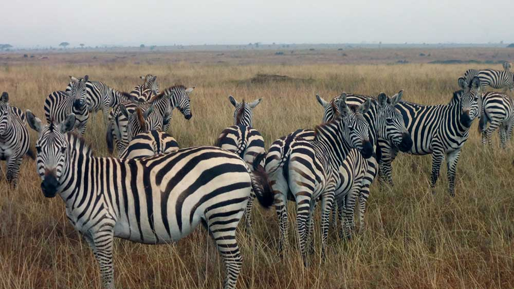 We always love to see zebras. They make us smile.