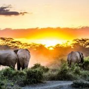 Sidai Oleng Wildlife Sanctuary, Kenya - Elephant at Sunset