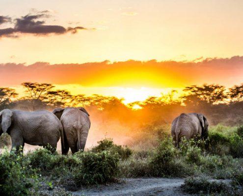 Sidai Oleng Wildlife Sanctuary, Kenya - Elephant at Sunset